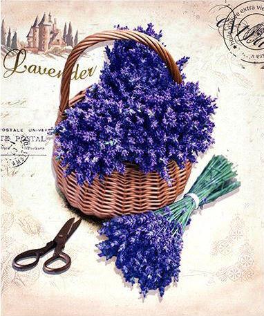 Obraz Lavender HA679378