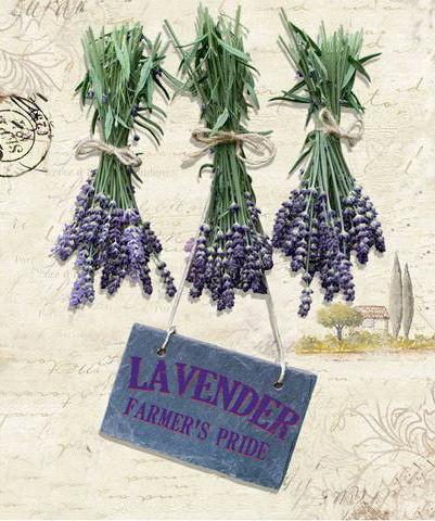 Obraz Lavender HA672607